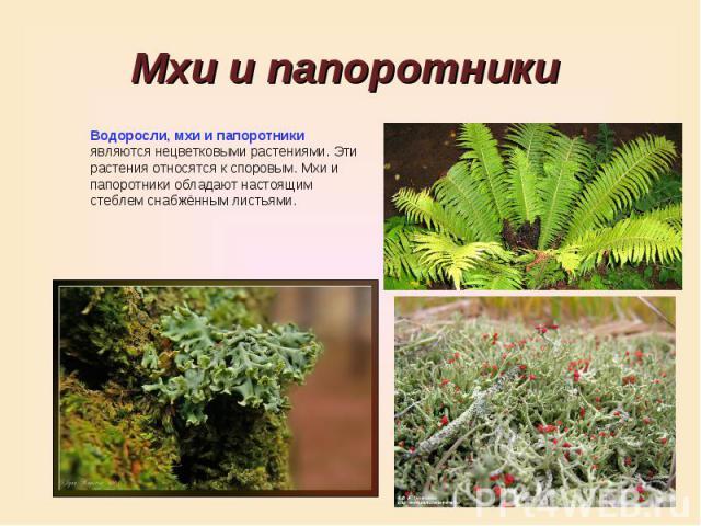 Мхи и папоротники Водоросли, мхи и папоротники являются нецветковыми растениями. Эти растения относятся к споровым. Мхи и папоротники обладают настоящим стеблем снабжённым листьями.
