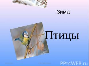 Зима Птицы