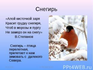 Снегирь«Алой кисточкой заряКрасит грудку снегиря,Чтоб в морозы и пургуНе замерз