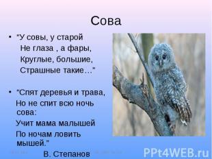 """Сова""""У совы, у старой Не глаза , а фары, Круглые, большие, Страшные такие…""""""""Спят"""