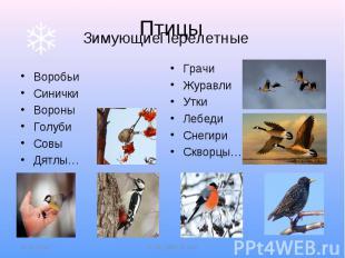 Птицы Зимующие Перелетные