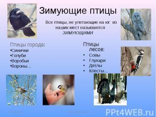 Зимующие птицы Все птицы, не улетающие на юг из наших мест называются ЗИМУЮЩИМИП