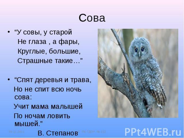 """Сова""""У совы, у старой Не глаза , а фары, Круглые, большие, Страшные такие…""""""""Спят деревья и трава, Но не спит всю ночь сова: Учит мама малышей По ночам ловить мышей."""" В. Степанов"""