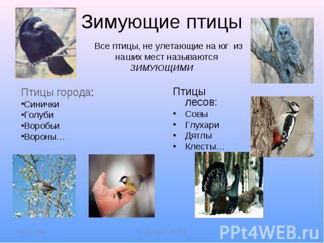 Зимующие птицы Все птицы, не улетающие на юг из наших мест называются ЗИМУЮЩИМИПтицы города:СиничкиГолубиВоробьиВороны… Птицы лесов:СовыГлухариДятлыКлесты…
