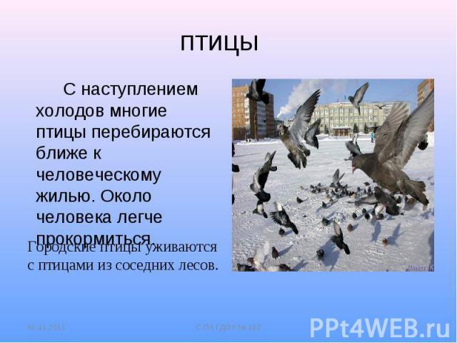 птицы С наступлением холодов многие птицы перебираются ближе к человеческому жилью. Около человека легче прокормиться.Городские птицы уживаются с птицами из соседних лесов.