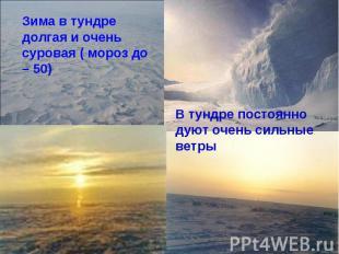 Зима в тундре долгая и очень суровая ( мороз до – 50)В тундре постоянно дуют оче