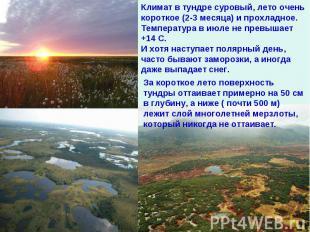 Климат в тундре суровый, лето очень короткое (2-3 месяца) и прохладное. Температ