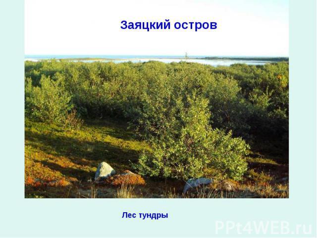 Заяцкий островЛес тундры