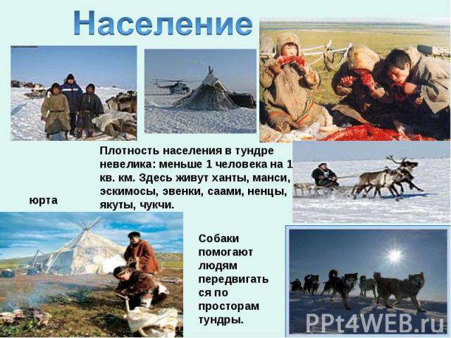 НаселениеПлотность населения в тундре невелика: меньше 1 человека на 1 кв. км. Здесь живут ханты, манси, эскимосы, эвенки, саами, ненцы, якуты, чукчи.Собаки помогают людям передвигаться по просторам тундры.