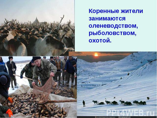 Коренные жители занимаются оленеводством, рыболовством, охотой.
