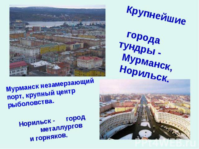 Крупнейшие городатундры - Мурманск, Норильск. Мурманск незамерзающий порт, крупный центр рыболовства. Норильск - город металлургов и горняков.