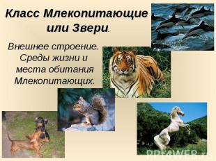 Класс Млекопитающие или Звери. Внешнее строение. Среды жизни и места обитания Мл