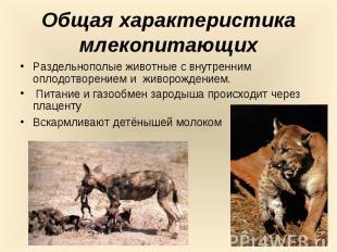 Общая характеристика млекопитающихРаздельнополые животные с внутренним оплодотво