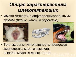 Общая характеристика млекопитающихИмеют челюсти с дифференцированными зубами (ре