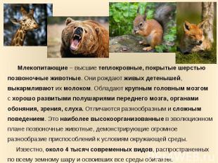 Млекопитающие – высшие теплокровные, покрытые шерстью позвоночные животные. Они