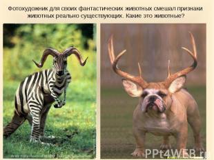 Фотохудожник для своих фантастических животных смешал признаки животных реально