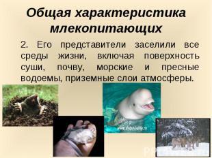 Общая характеристика млекопитающих2. Его представители заселили все среды жизни,