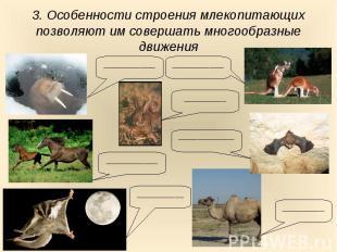 3. Особенности строения млекопитающих позволяют им совершать многообразные движе