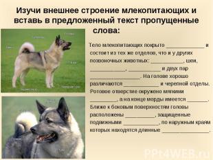 Изучи внешнее строение млекопитающих и вставь в предложенный текст пропущенные с
