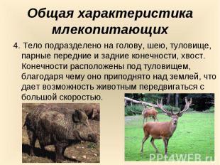Общая характеристика млекопитающих4. Тело подразделено на голову, шею, туловище,