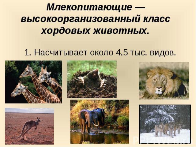 Млекопитающие —высокоорганизованный класс хордовых животных. 1. Насчитывает около 4,5 тыс. видов.