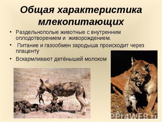 Общая характеристика млекопитающихРаздельнополые животные с внутренним оплодотворением и живорождением. Питание и газообмен зародыша происходит через плацентуВскармливают детёнышей молоком