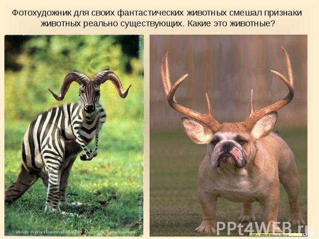 Фотохудожник для своих фантастических животных смешал признаки животных реально существующих. Какие это животные?