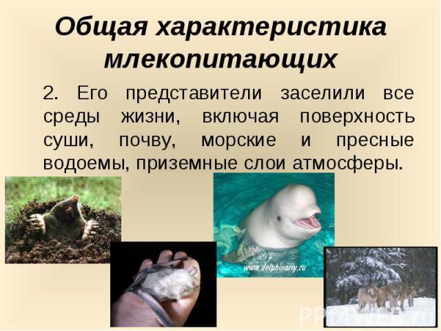 Общая характеристика млекопитающих2. Его представители заселили все среды жизни, включая поверхность суши, почву, морские и пресные водоемы, приземные слои атмосферы.