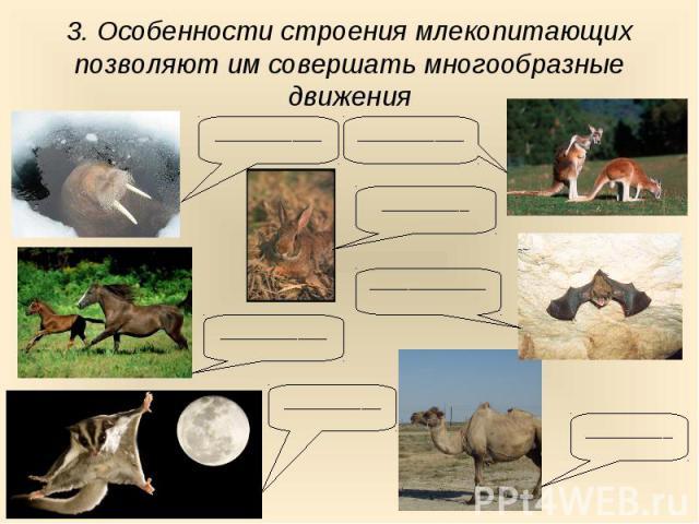 3. Особенности строения млекопитающих позволяют им совершать многообразные движения