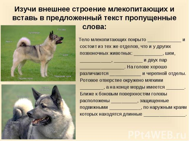 Изучи внешнее строение млекопитающих и вставь в предложенный текст пропущенные слова: Тело млекопитающих покрыто _____________ и состоит из тех же отделов, что и у других позвоночных животных: ___________, шеи, ____________, ___________ и двух пар _…
