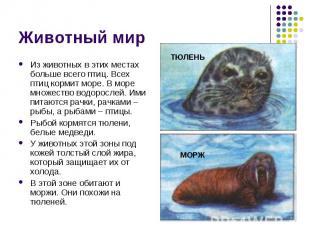 Животный мир Из животных в этих местах больше всего птиц. Всех птиц кормит море.