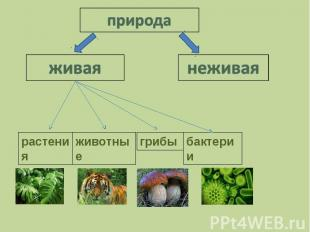 природаживаянеживая