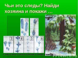 Чьи это следы? Найди хозяина и покажи …1-заяц, 2-лиса, 3-белка, 4-рябчик, 5-мышь