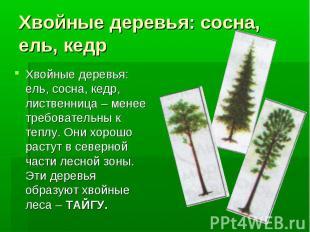 Хвойные деревья: сосна, ель, кедрХвойные деревья: ель, сосна, кедр, лиственница