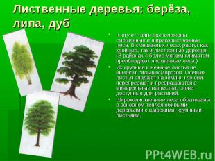 Лиственные деревья: берёза, липа, дубК югу от тайги расположены смешанные и широ