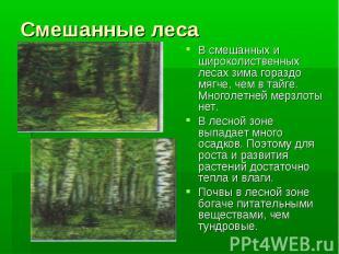 Смешанные лесаВ смешанных и широколиственных лесах зима гораздо мягче, чем в тай