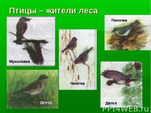 Птицы – жители леса