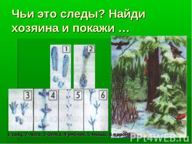 Чьи это следы? Найди хозяина и покажи …1-заяц, 2-лиса, 3-белка, 4-рябчик, 5-мышь, 6-ворона