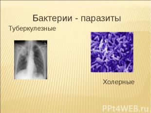 Бактерии - паразитыТуберкулезные Холерные