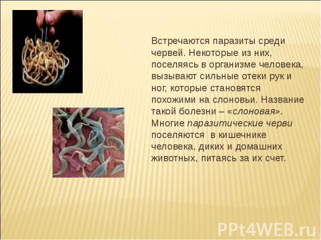 Встречаются паразиты среди червей. Некоторые из них, поселяясь в организме человека, вызывают сильные отеки рук и ног, которые становятся похожими на слоновьи. Название такой болезни – «слоновая». Многие паразитические черви поселяются в кишечнике ч…