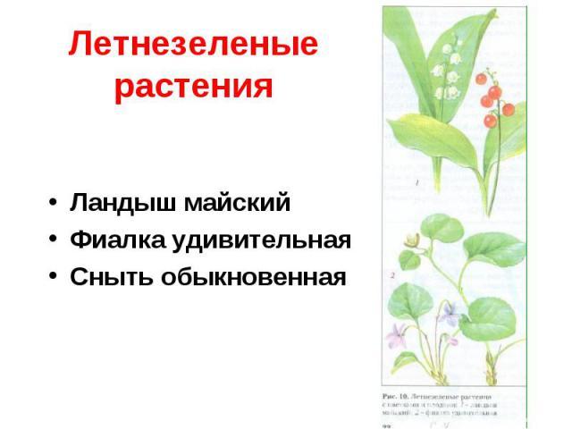 Летнезеленые растенияЛандыш майскийФиалка удивительнаяСныть обыкновенная