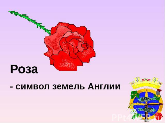 Роза - символ земель Англии