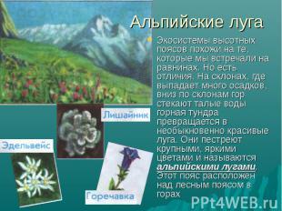 Альпийские луга Экосистемы высотных поясов похожи на те, которые мы встречали на