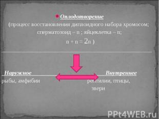 Оплодотворение(процесс восстановления диплоидного набора хромосом; сперматозоид