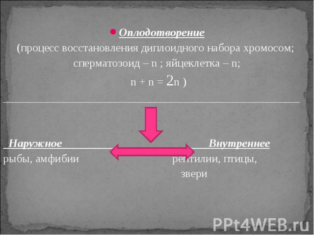 Оплодотворение(процесс восстановления диплоидного набора хромосом; сперматозоид – n ; яйцеклетка – n; n + n = 2n )____________________________________________________ Наружное Внутреннеерыбы, амфибии рептилии, птицы, звери