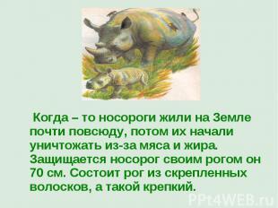 Когда – то носороги жили на Земле почти повсюду, потом их начали уничтожать из-з