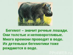 Бегемот – значит речные лошади. Они толстые и неповоротливые. Много времени пров