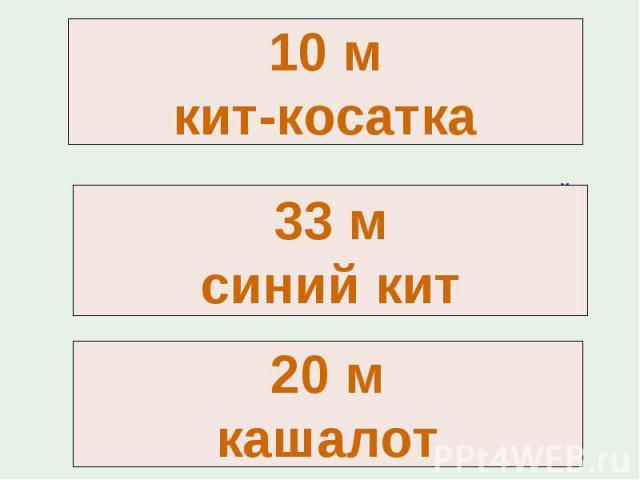 10 мкит-косатка33 мсиний кит20 мкашалот