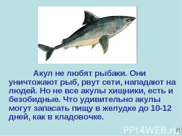 Акул не любят рыбаки. Они уничтожают рыб, рвут сети, нападают на людей. Но не все акулы хищники, есть и безобидные. Что удивительно акулы могут запасать пищу в желудке до 10-12 дней, как в кладовочке.