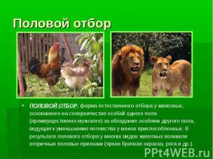 Половой отборПОЛОВОЙ ОТБОР, форма естественного отбора у животных, основанного н